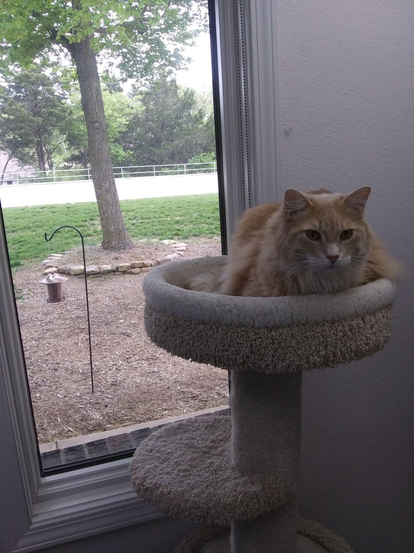 Cat Boarding Woodland Animal Hospital Jefferson City Missouri