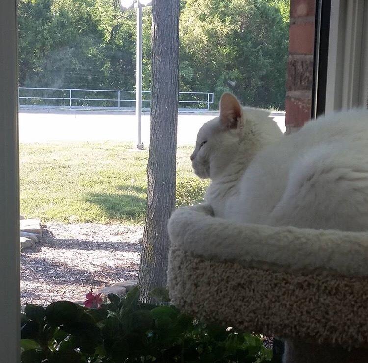 Feline Boarding Jefferson City Missouri Woodland Animal Hospital
